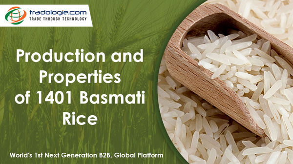 production, properties and market of 1401 Basmati rice