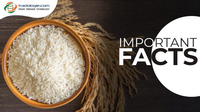 Basmati Rice More Special Than Others? Important Facts